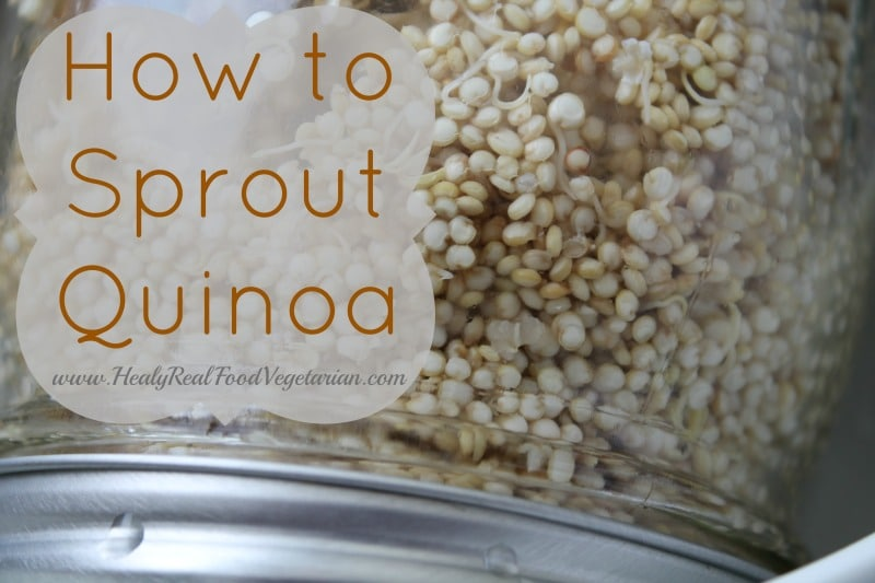 how to sprout quinoa