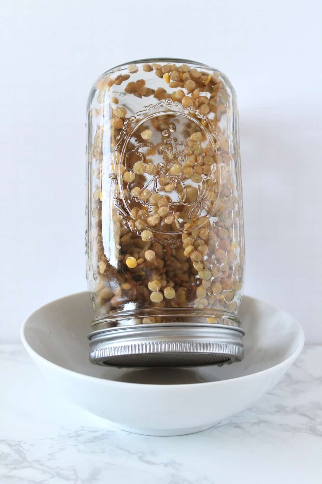 Upside down mason jar filled with brown lentils with a sprouting lid on it resting in a white bowl