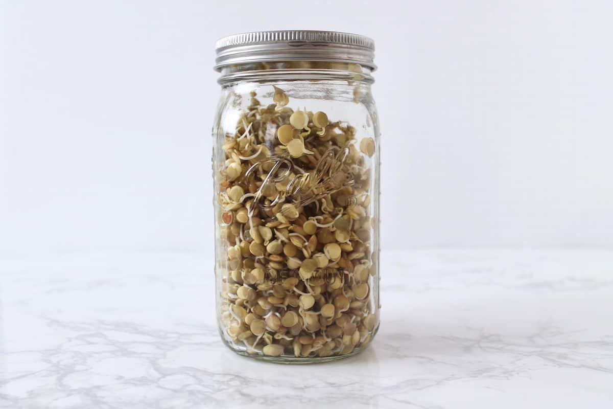 Clear mason jar filled with sprouted lentils on a white marble surface