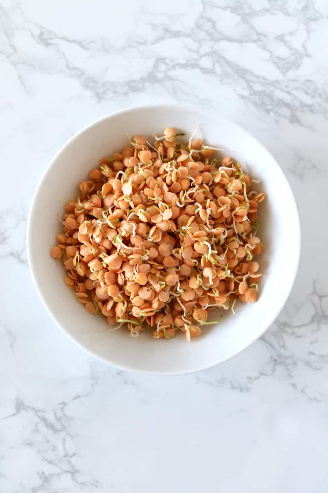 White bowl filled with sprouted red lentils on a white marble surface