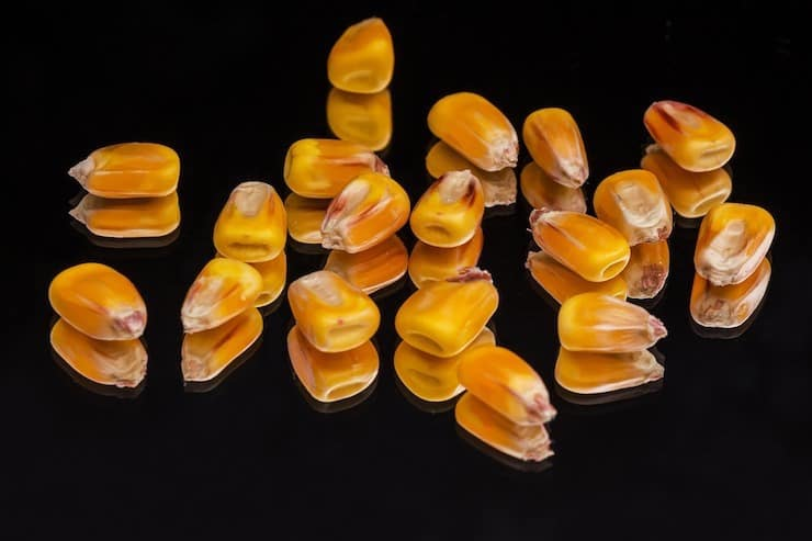 Corn kernels with black background