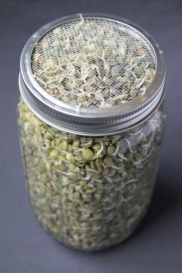 A mason jar filled with sprouted lentils used as part of a real food basics for beginners guide