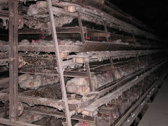 Battery_Cage_02