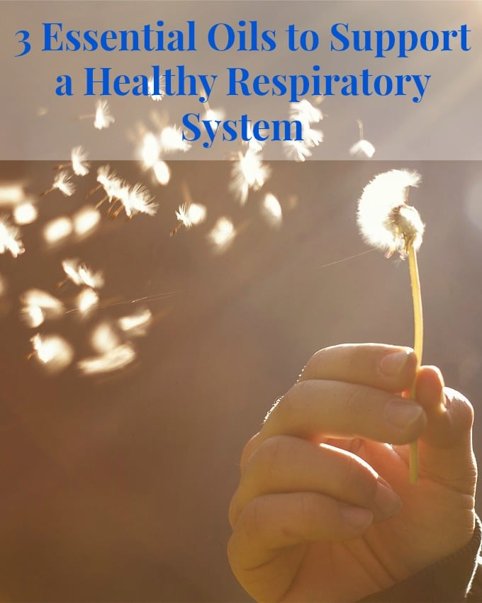 Essential Oils to Support A Healthy Respiratory System