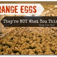 Free Range Eggs: They're NOT What You Think They Are