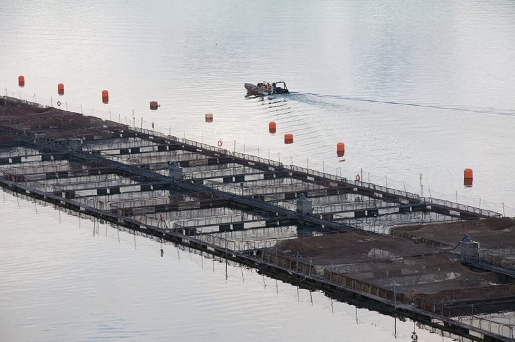 Farmed salmon pens with a boat in the background