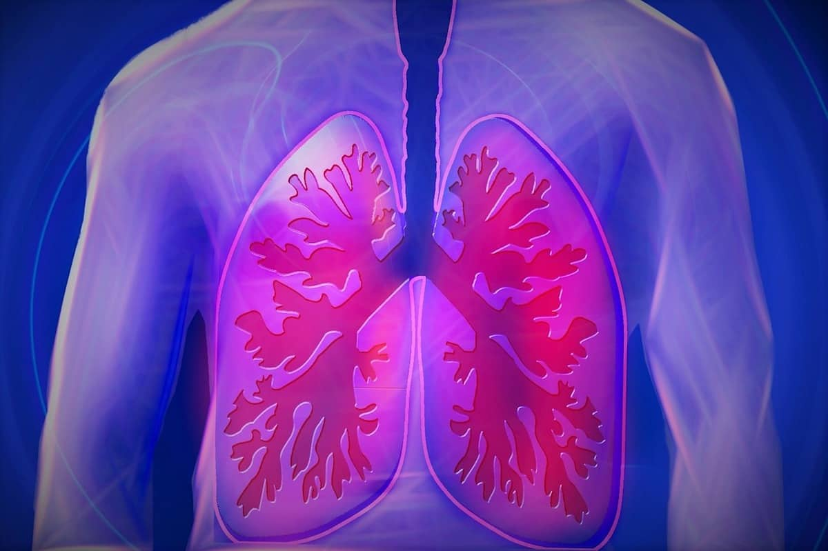 Purple illustration of human lungs