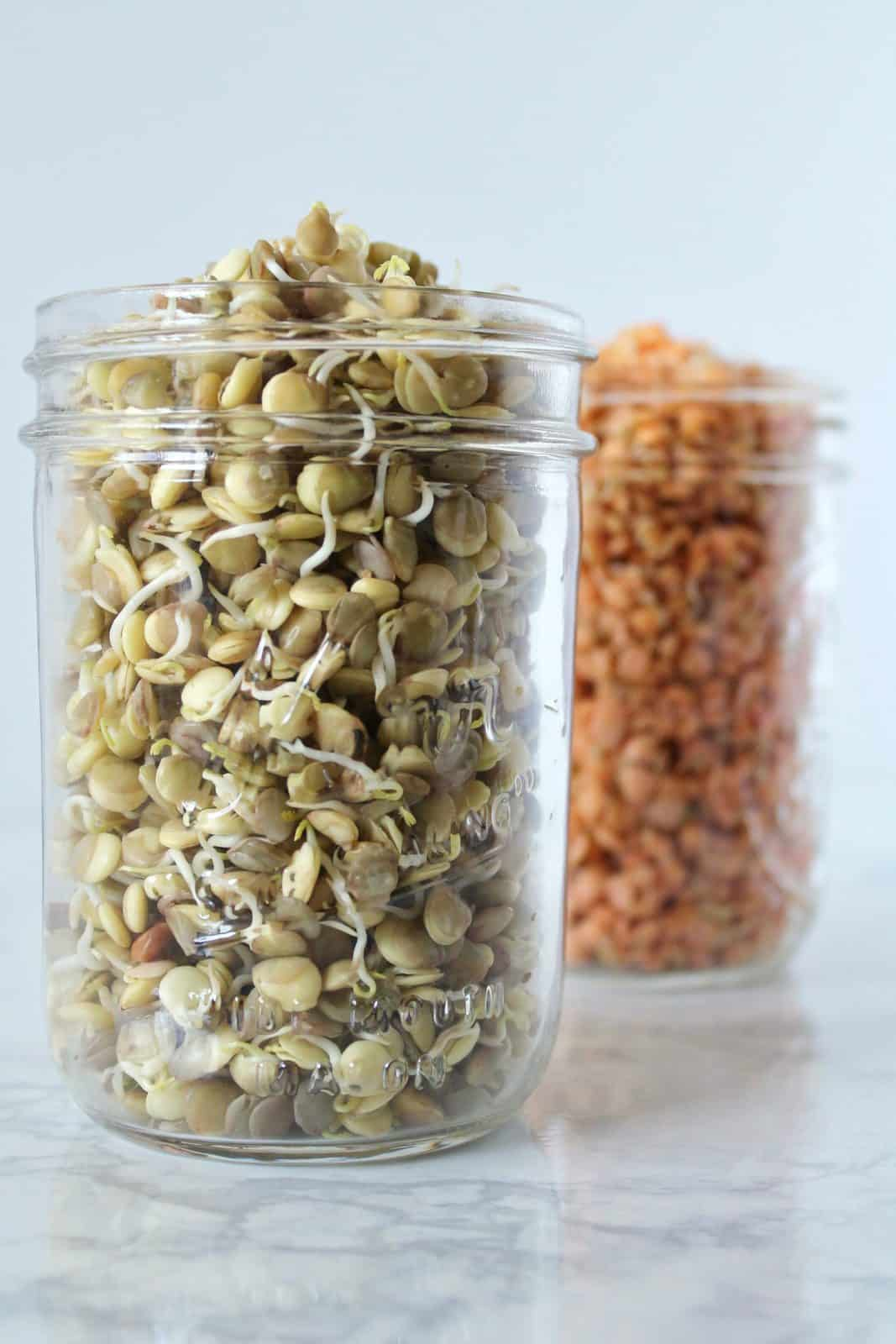 Two mason jars, one filled with brown lentil sprouts, one filled with red lentil sprouts on a white marble surface